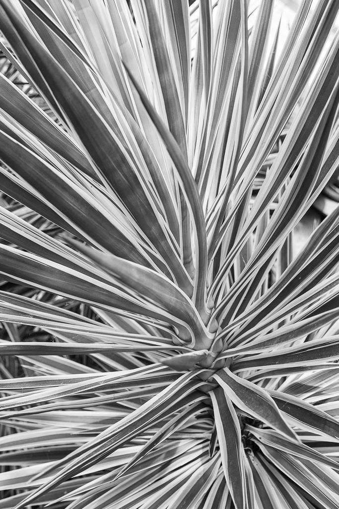 Botanical garden-2.JPG