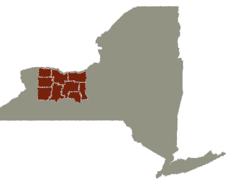NY FL Map.png