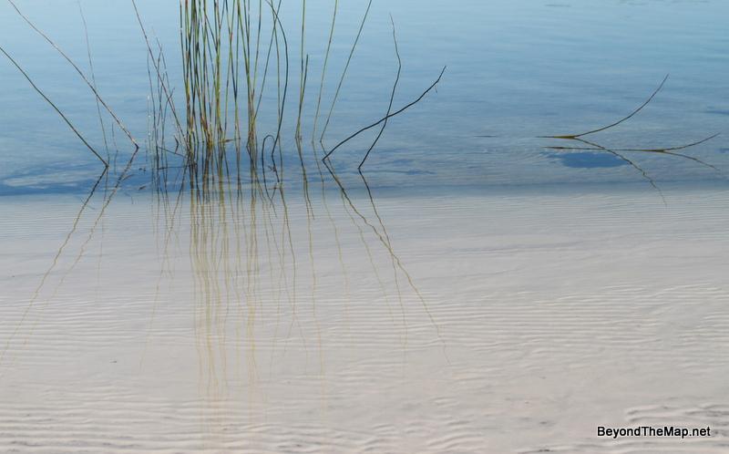 Reeds in Lake McKenzie