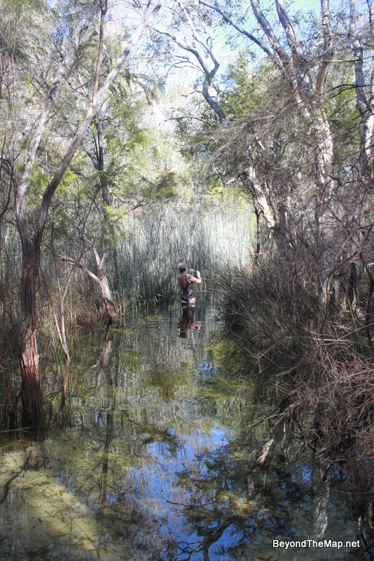 Walking back to the picnic area we crossed a flooded bridge surrounded by reeds. We were waist deep in water!