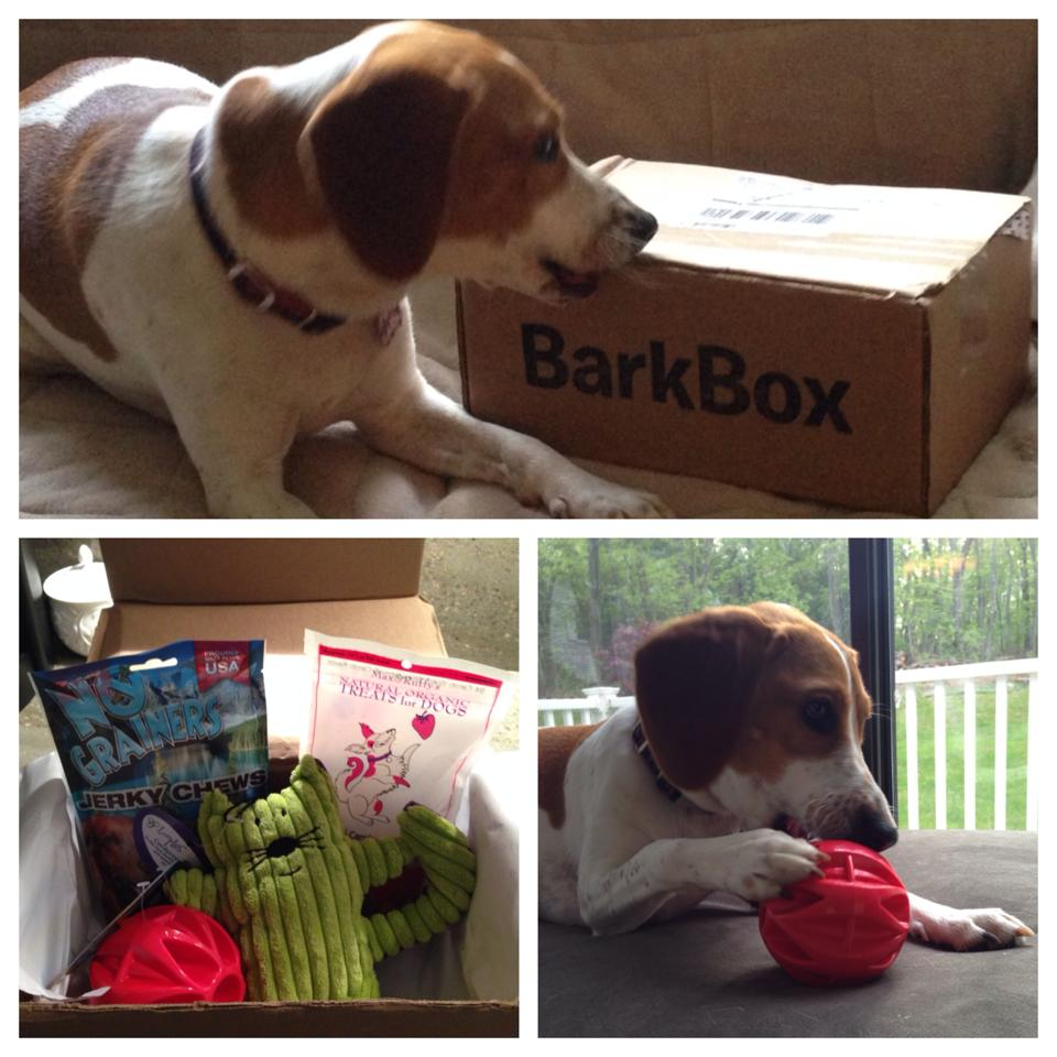 Thank Dog Rescue alum loves her BarkBox!