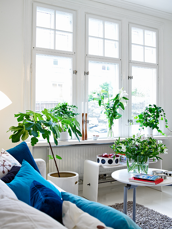 plants-in-home.jpg