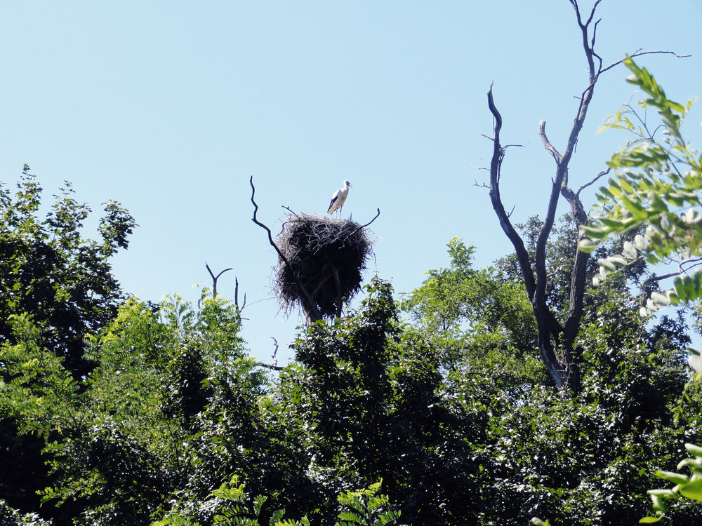 I was fascinated by the giant stork nests. It's amazing how they can build there on a very small space so large burrow :)   //   Byla jsem fascinována obřími hnízdy čápů. Přišlo mi úžasné, jak si na tak malém prostoru umí postavit tak velký kutloch :)