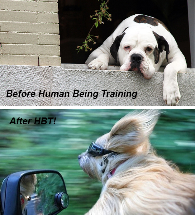 before-after-dogs.jpg