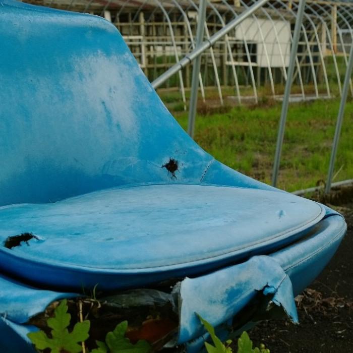 bluebeauty_toyama.jpg
