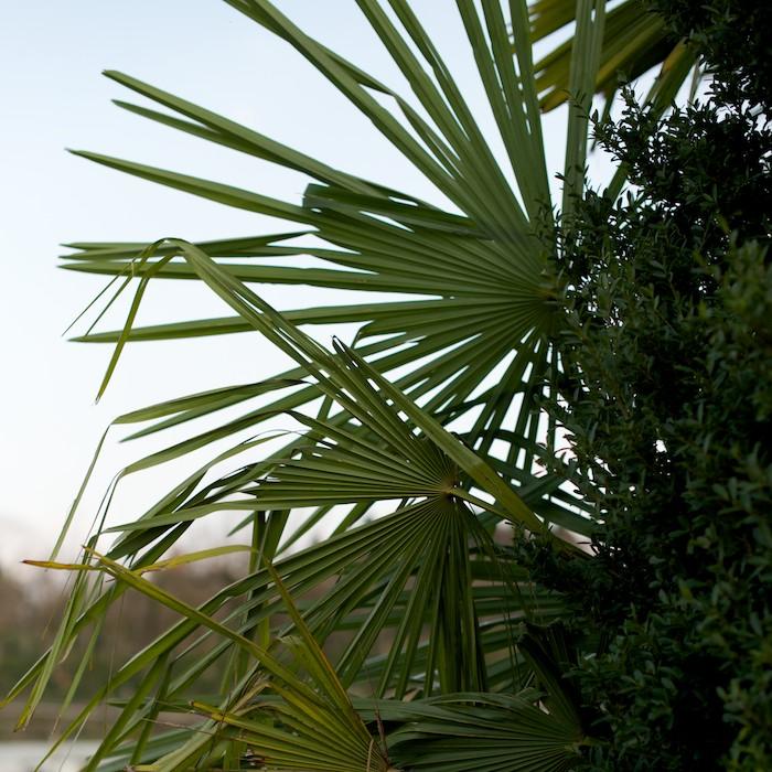 fan of green.jpg