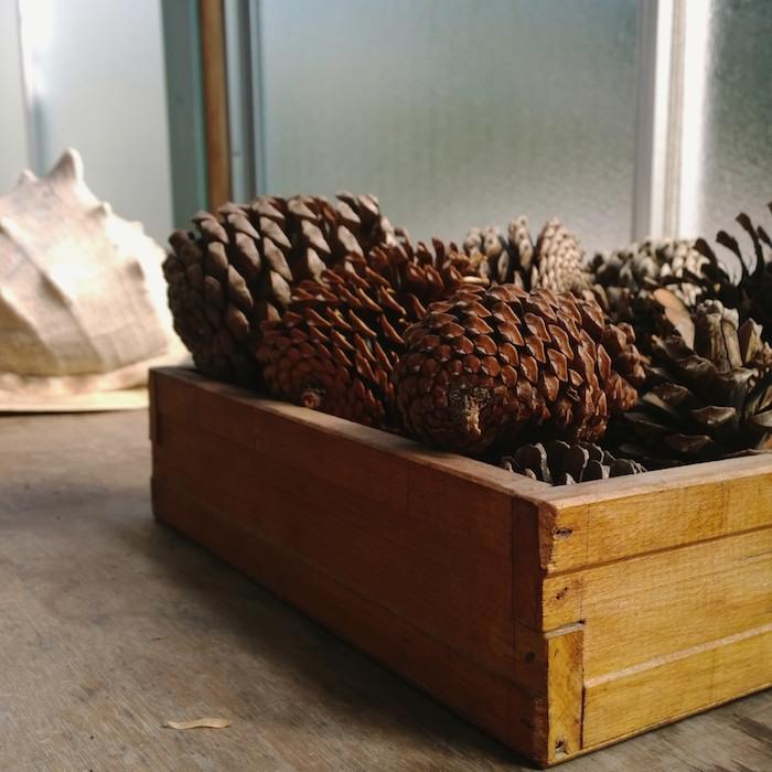 conch & cones.jpg
