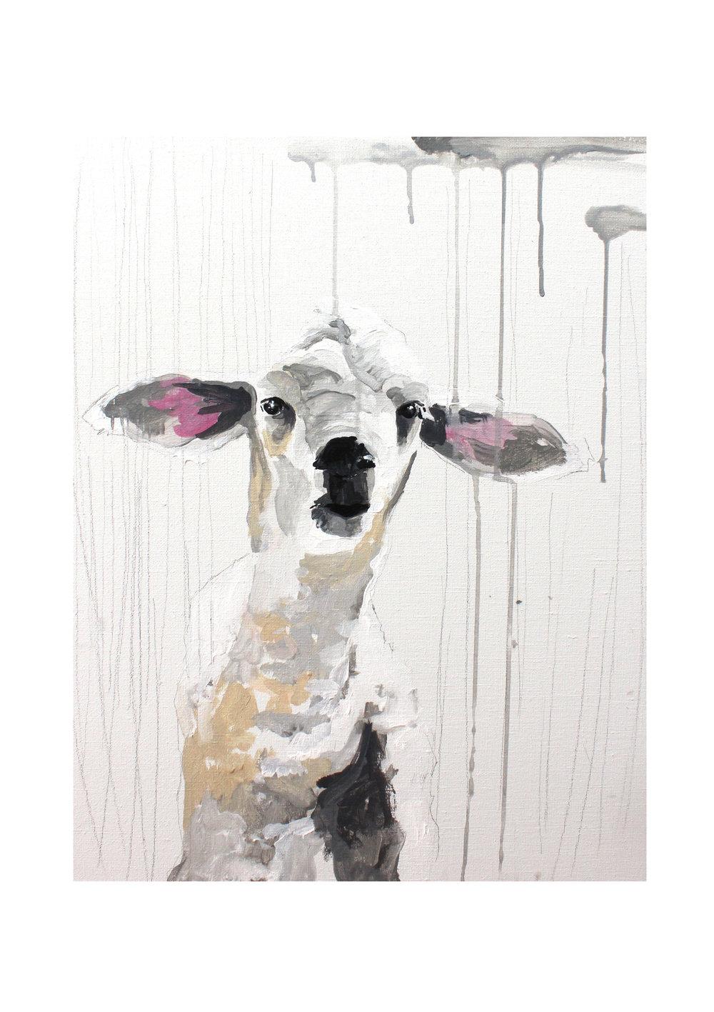 sheep+8.jpg