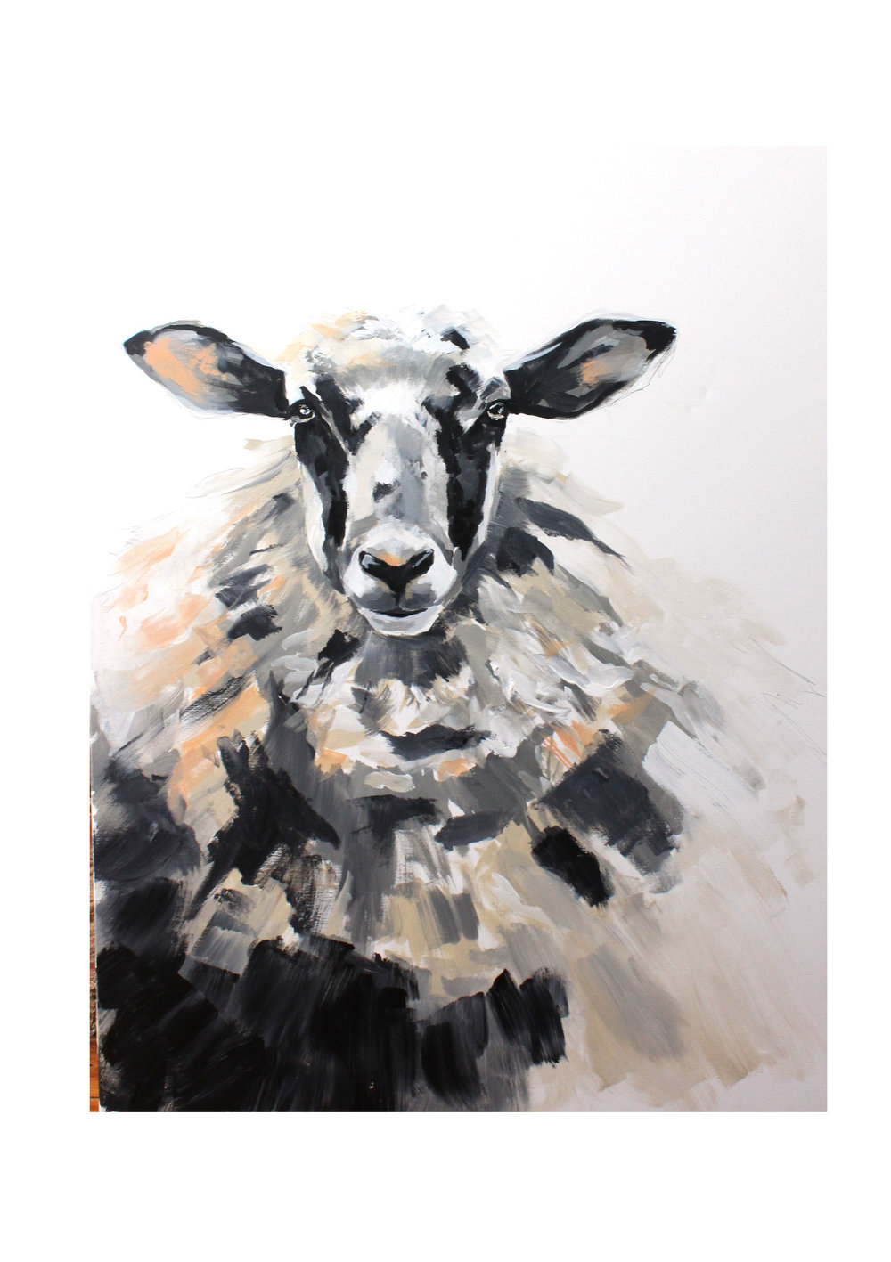 sheep+9 (1).jpg