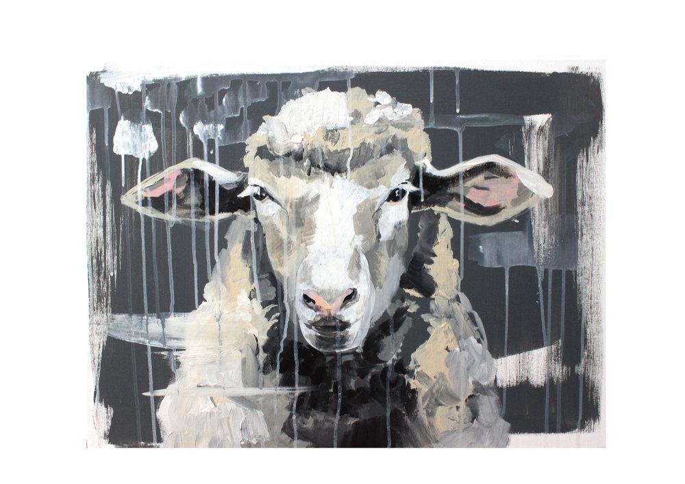 sheep+6.jpg