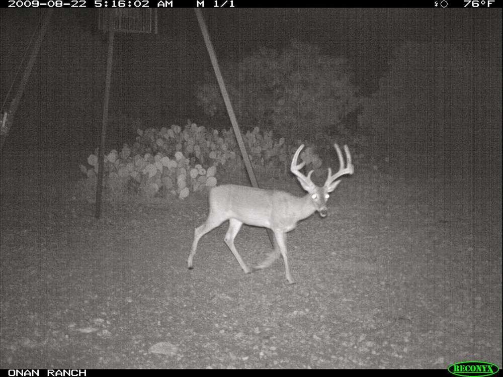 big deer.jpg