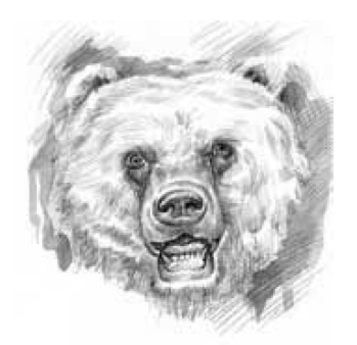 bearlogo.png
