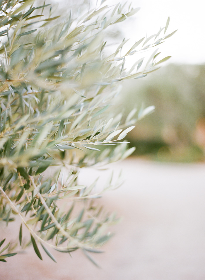 Olive trees decorated the paths throughout the venue.