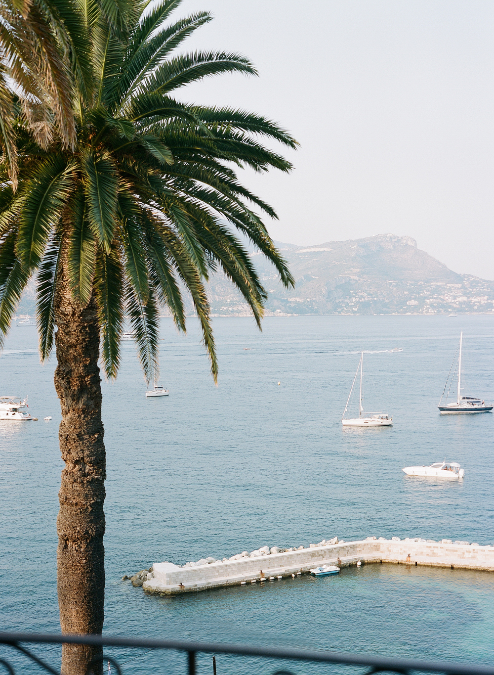 A palm tree looking out over the French Riviera; photo by Sylvie Gil