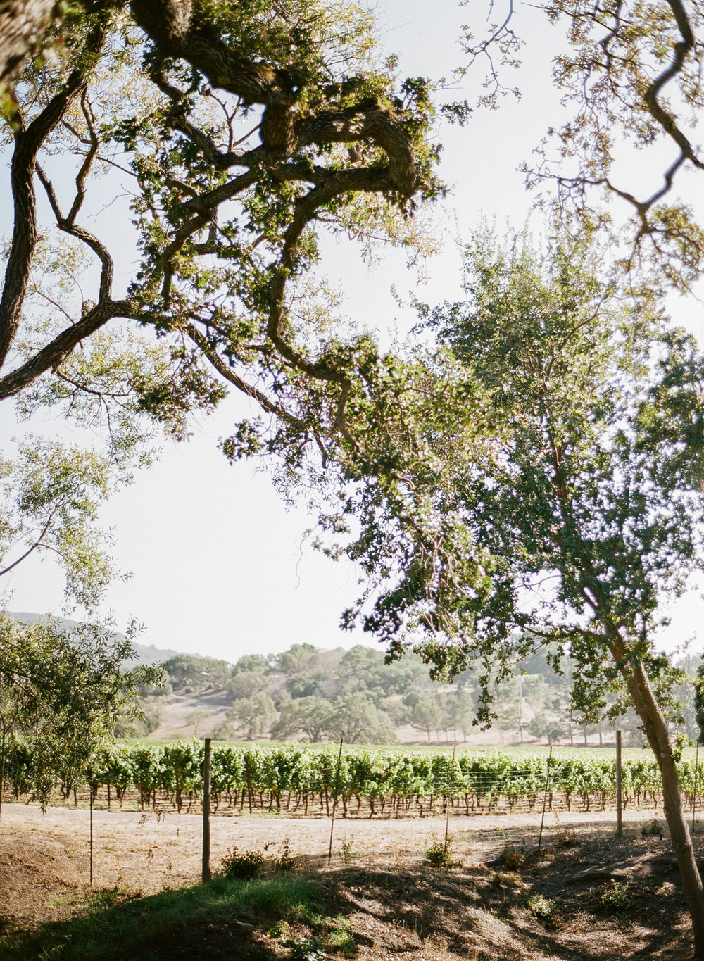 A view of the surrounding Napa vineyards near the ceremony; photo by Sylvie Gil