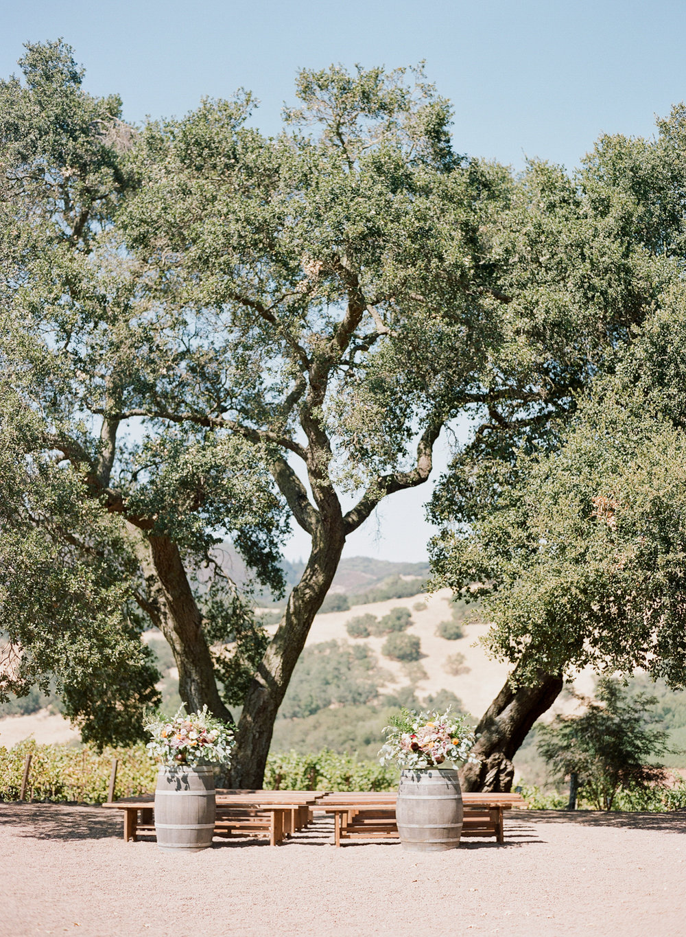Kunde Family Winery wedding ceremony between two oak trees, Napa Valley; Sylvie Gil Photography