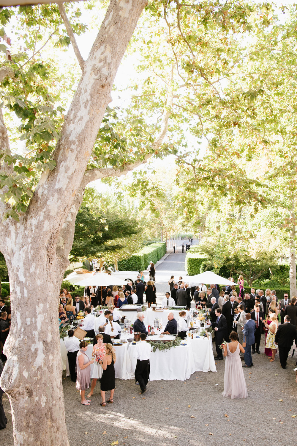 Guests mill around the cocktail bar before the reception begins in Beaulieu Gardens, St. Helena; Sylvie Gil Photography