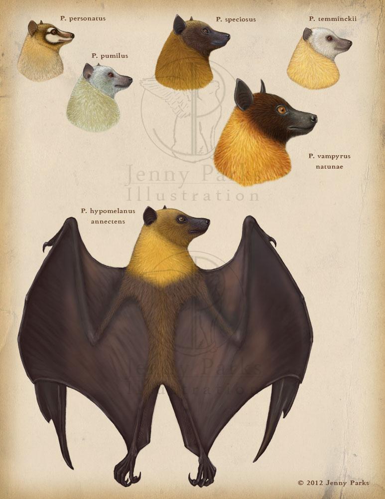 Genus Pteropus
