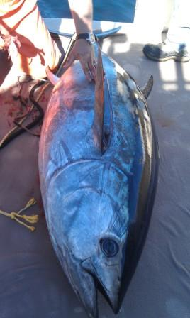 Bluefin.WEB_.jpg
