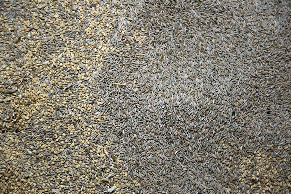 FarmerGround-PeterBarrett-05.png