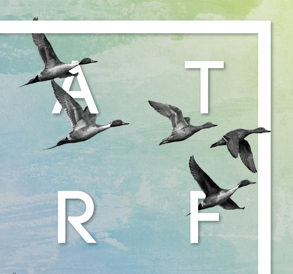 Waterfowled Poster (detail).png