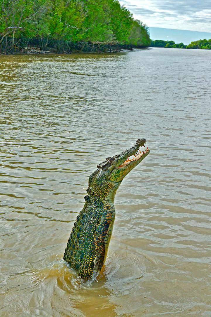 jump croc file.png