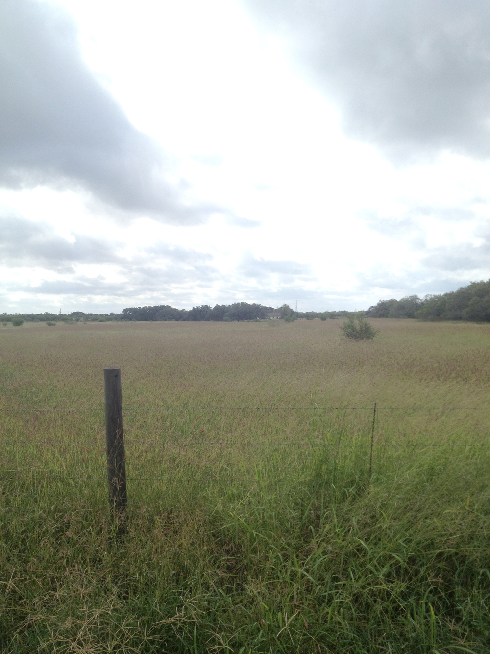 The scenery from Friday's run in Texas! My cousin lives out in the boonies! It was awesome :)