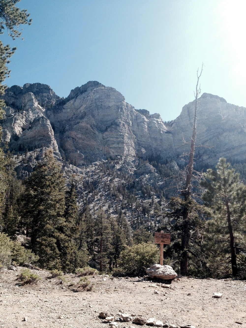 Halfway up our trail at Mt. Charleston and enjoying the view!