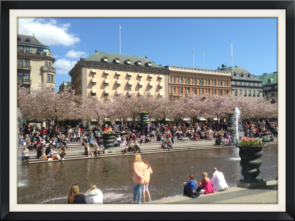 Kungsträdgården in central Stockholm. Cherry blossom trees, fountain, people.