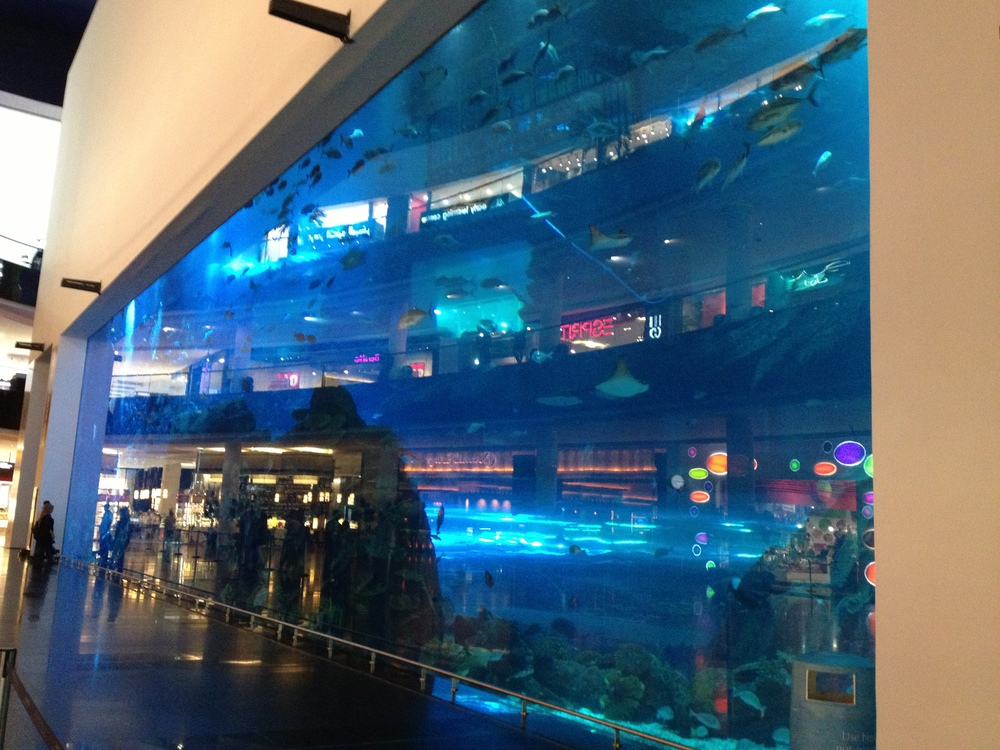 Dubai Mall Underwater Zoo--in the Guinness Book of World Records as the largest single acrylic panel in the world!