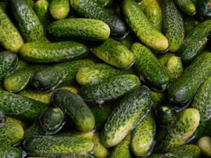 famous Spreewald pickles