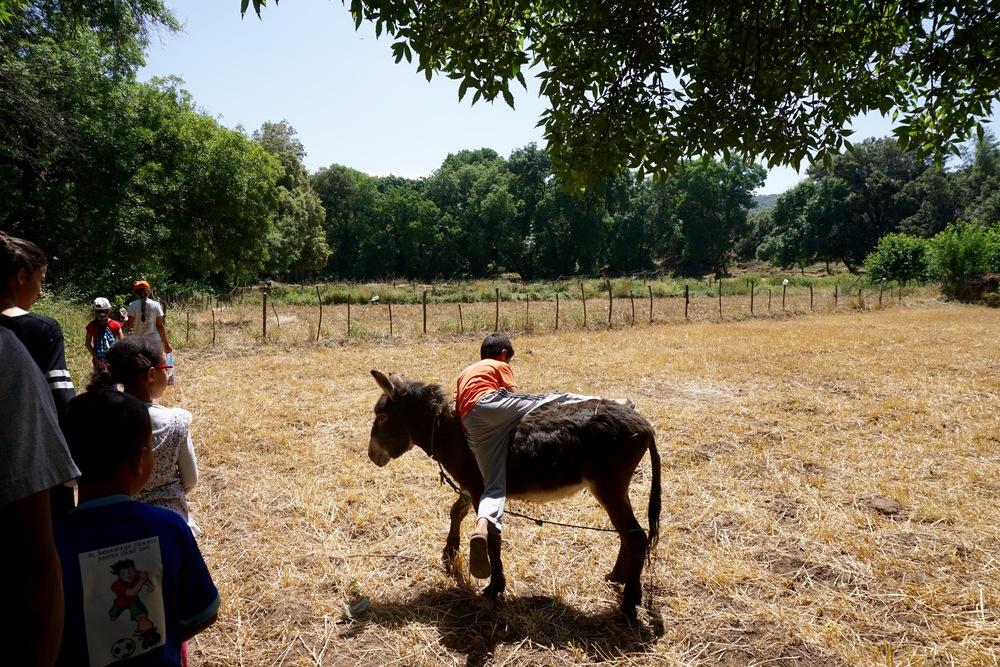 Typical Wael mounting a random donkey.