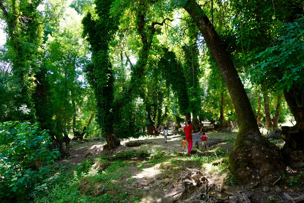 The greenery never ceases to amaze me.  After frying in the heat and treeless landscape of Zaouia, the kids love to run through the shade, crossing the rivers, and leaping over the moss covered roots.