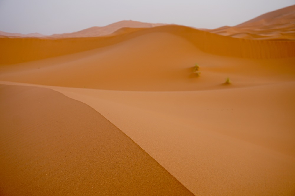 The curvature of The Sahara.