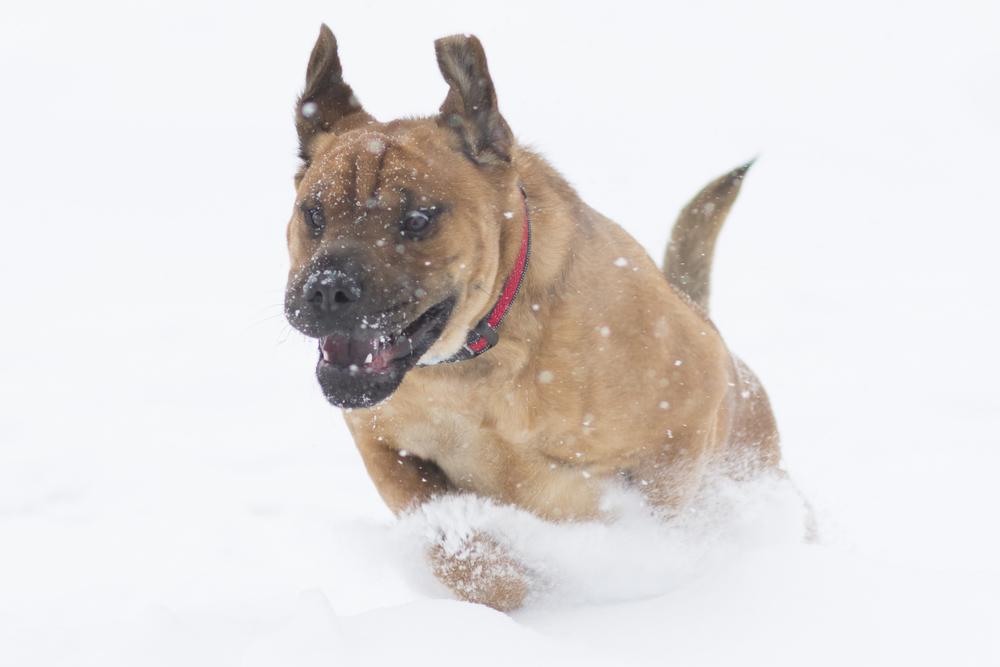 Turk in Snow