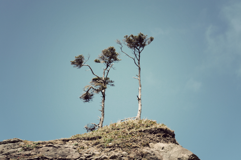lapush_treerock.jpg