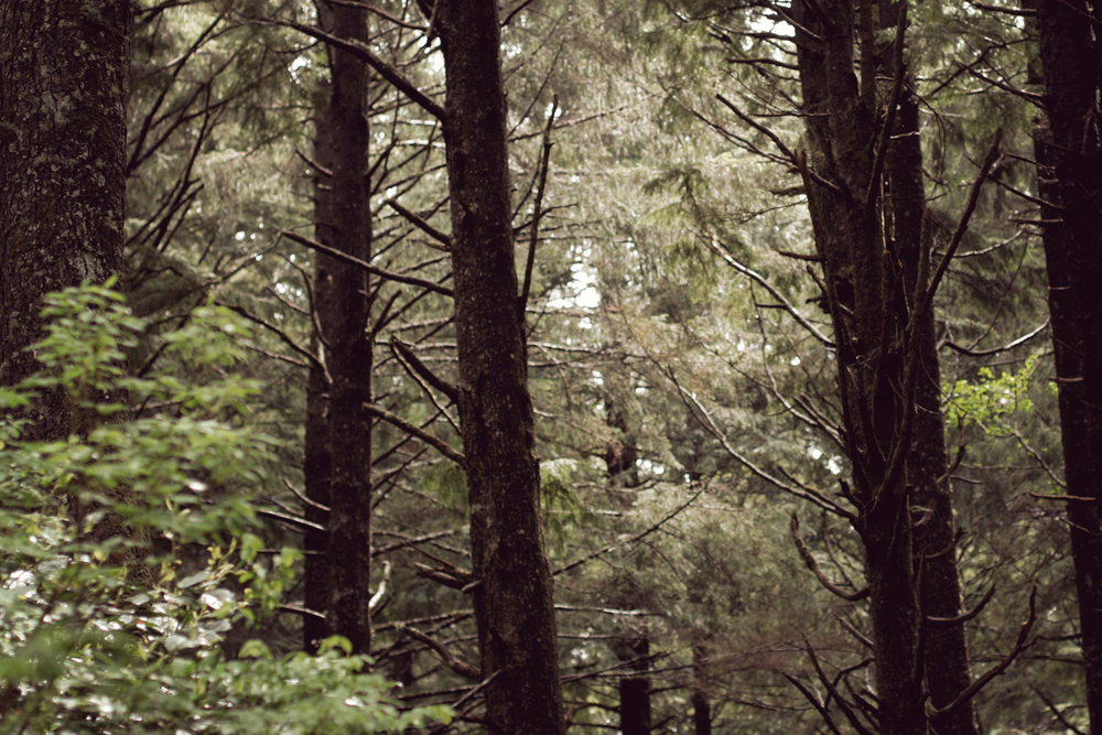 lapush_forest.jpg