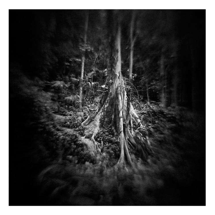 floresta5_quadrado.jpg