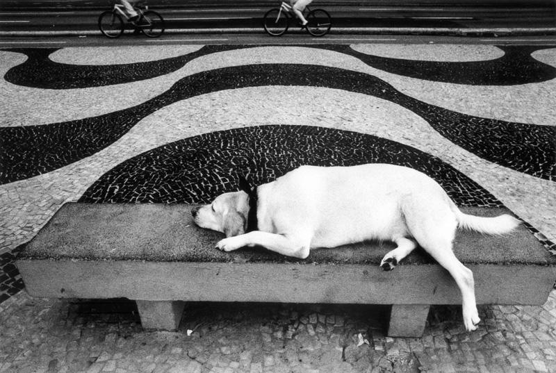 cachorro-calcadao-copacabana-2-kittyparanagua.jpg