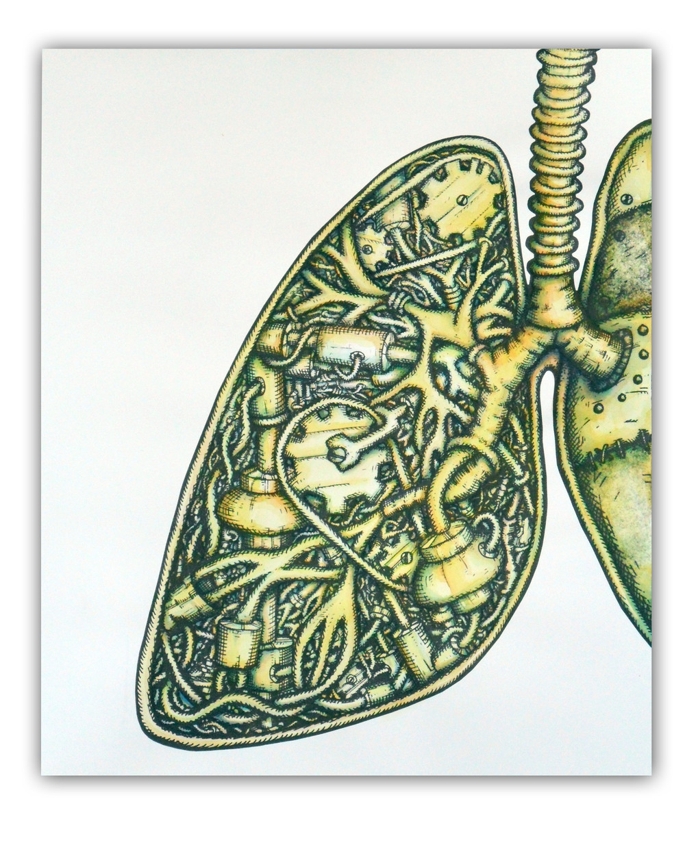 lung large watercolor.jpg