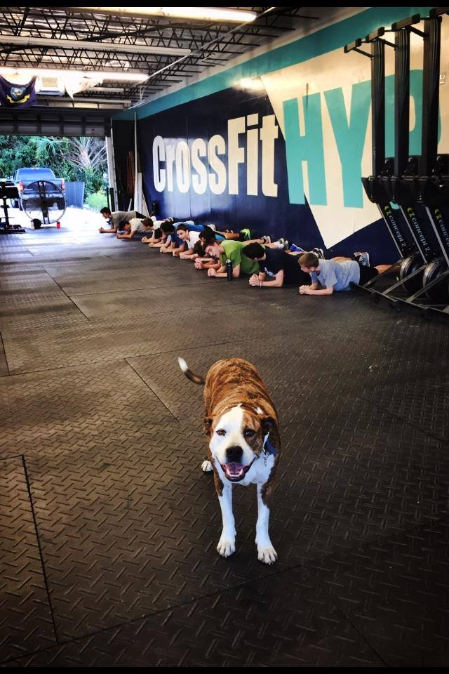 CrossFit HYPE East Boca Raton Fitness Mizner Park gym Palmetto Beach Pitbull dog crossfit teens kids