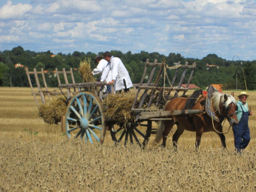 Horse:cart IMG_0154.jpg