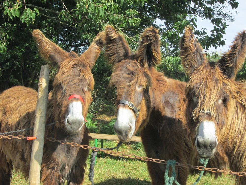 Donkey IMG_0160.jpg