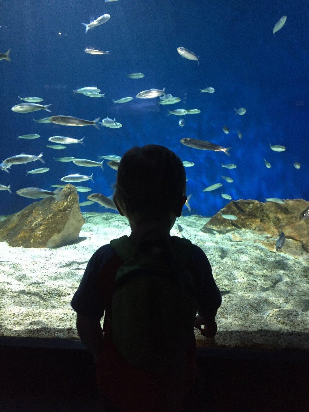 Kieran Fish 2.JPG