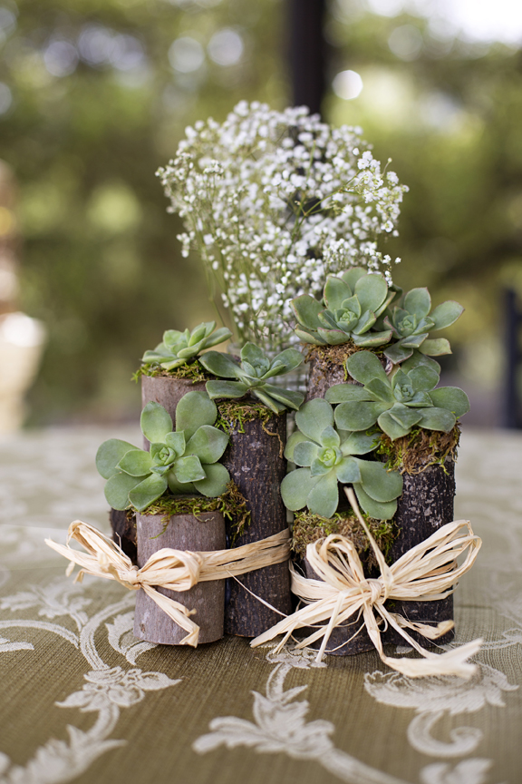 succulents on tiny rustic logs