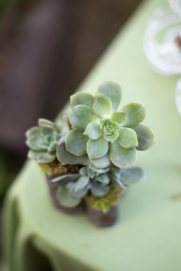 succulentdecor.jpg