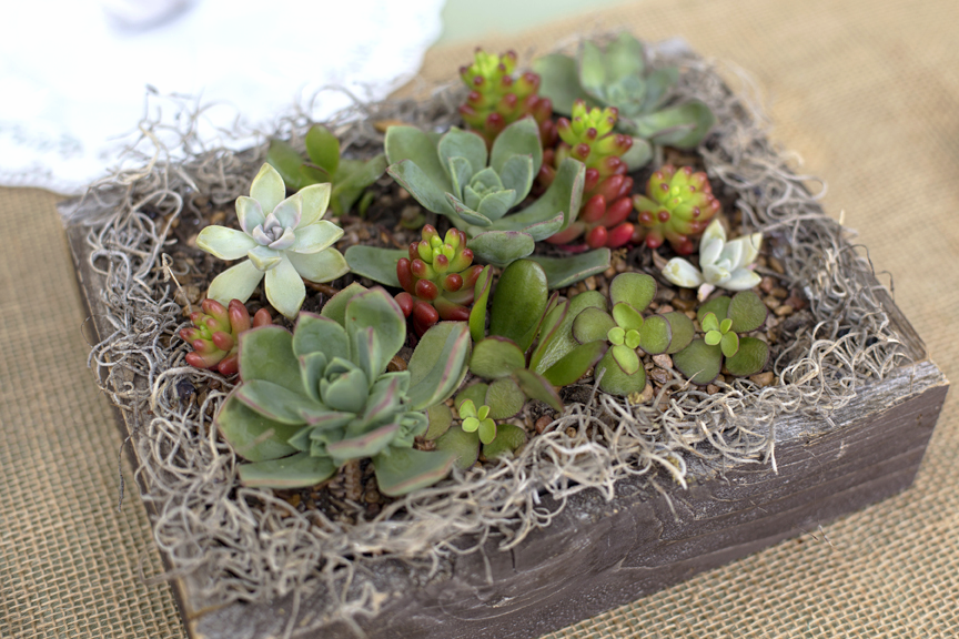 rustic succulent wedding centerpiece