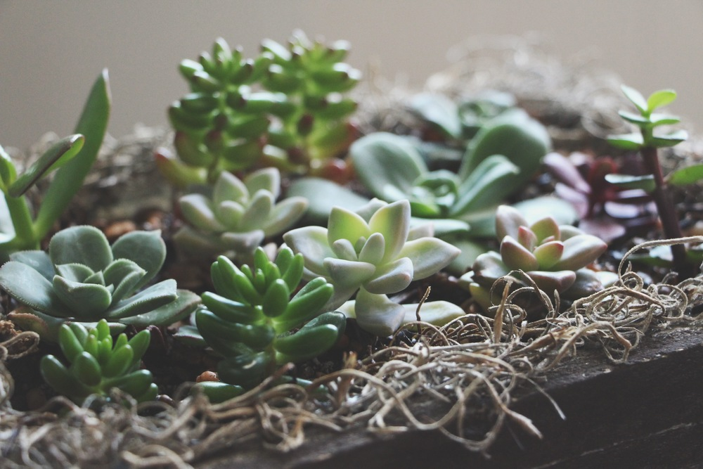 succulent arrangement via needles + leaves