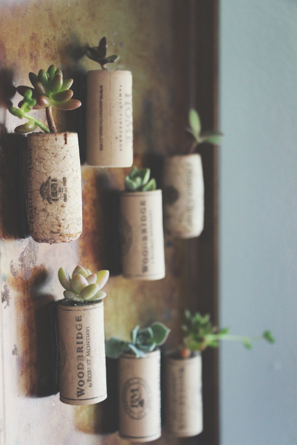 succulents in wine corks via needles + leaves