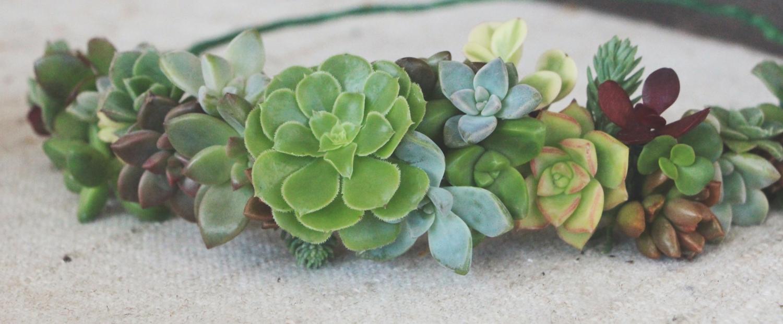 Diy Succulent Crown Needles Leaves